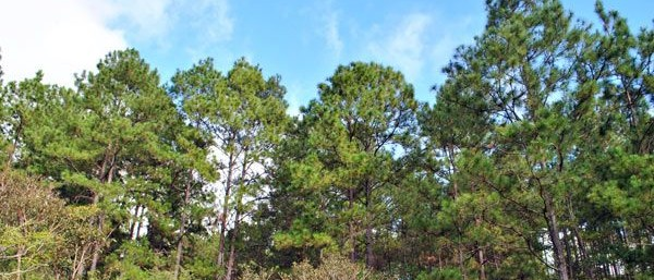 Fincas Modelos de Especies Forestales