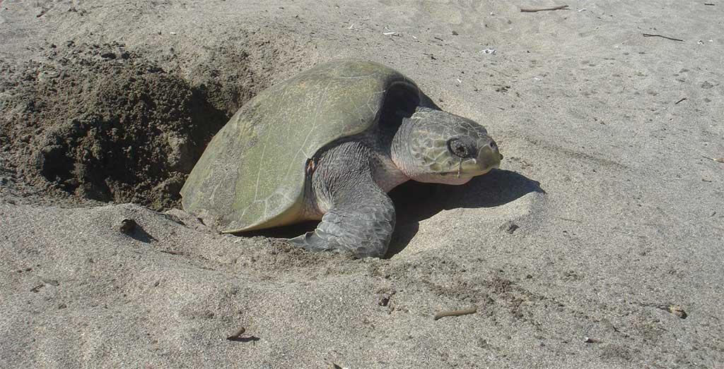 Tortuga-paslama