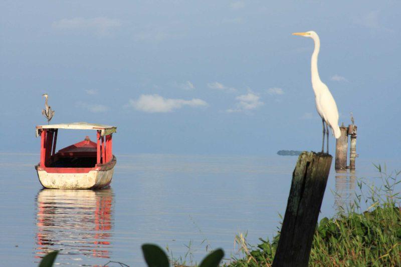 garzas-Isla Zapote-Rio-San-Juan-Nicaragua