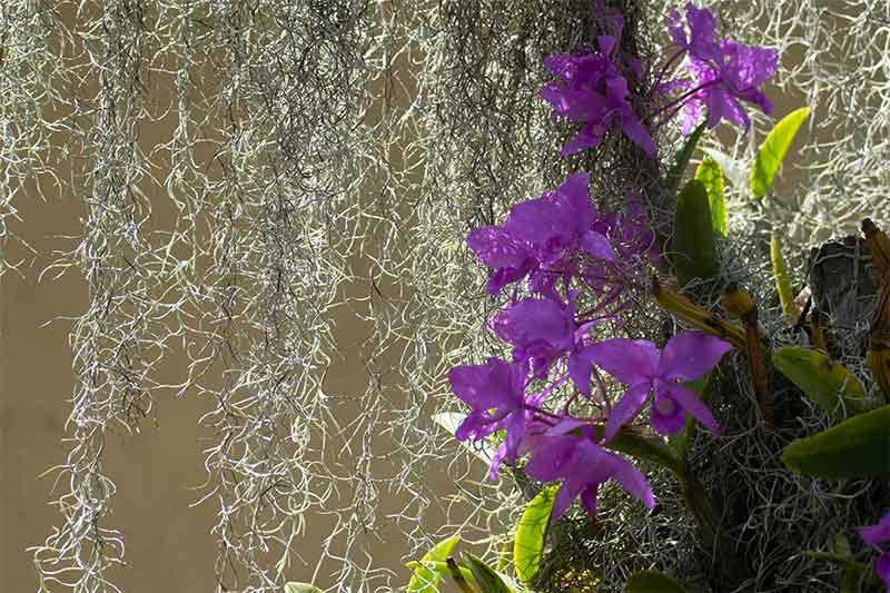 orquideas-Nueva segovia Nicaragua