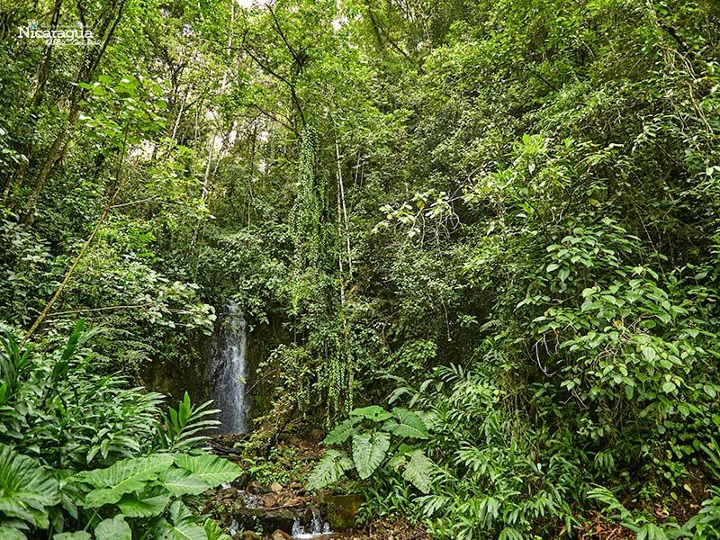 Reserva El Arenal,-Matagalpa