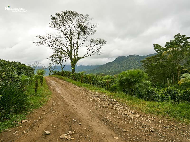Reserva-El-Arenal,-Matagalpa