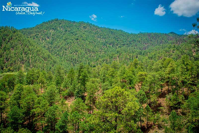 Bosques-de-Dipilto,-Nueva-Segovia